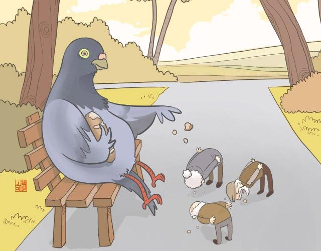 Чим годувати голубів