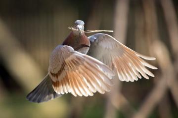 Регіональна ярмарка голубів, домашніх та декоративних тварин і птахів