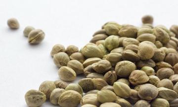 Все, що вам необхіно знати про насіння коноплі
